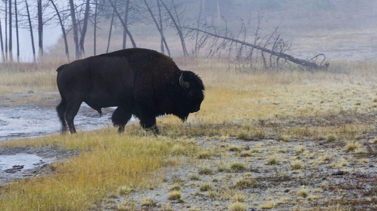 Yellowstone & Grand Teton 2018