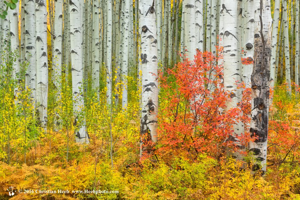 USA, Colorado, Aspen along McClure Pass in the Colorado Rockies