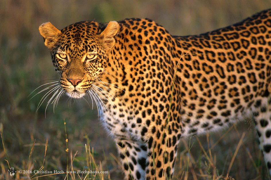Südafrika Foto Safari