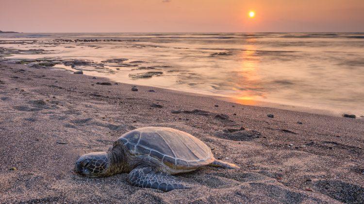 Hawaii Foto Reise