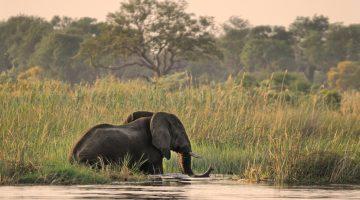 Botswana Foto Safari