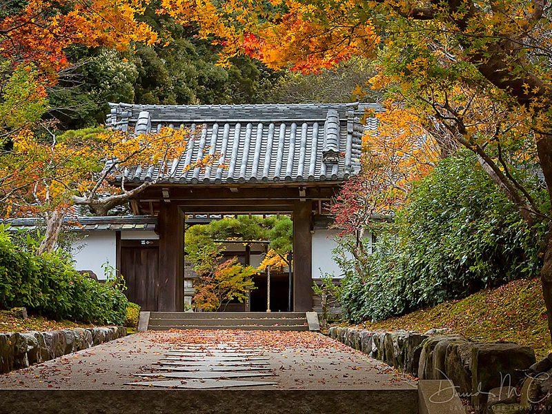 Magisches Japan Foto Reise 2021