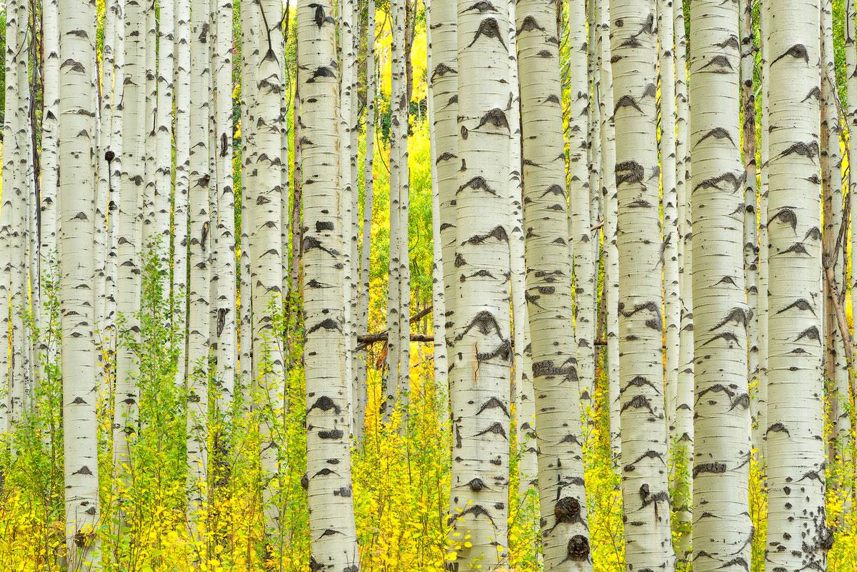 Herbstfarben in Colorado & New Mexiko, 2021