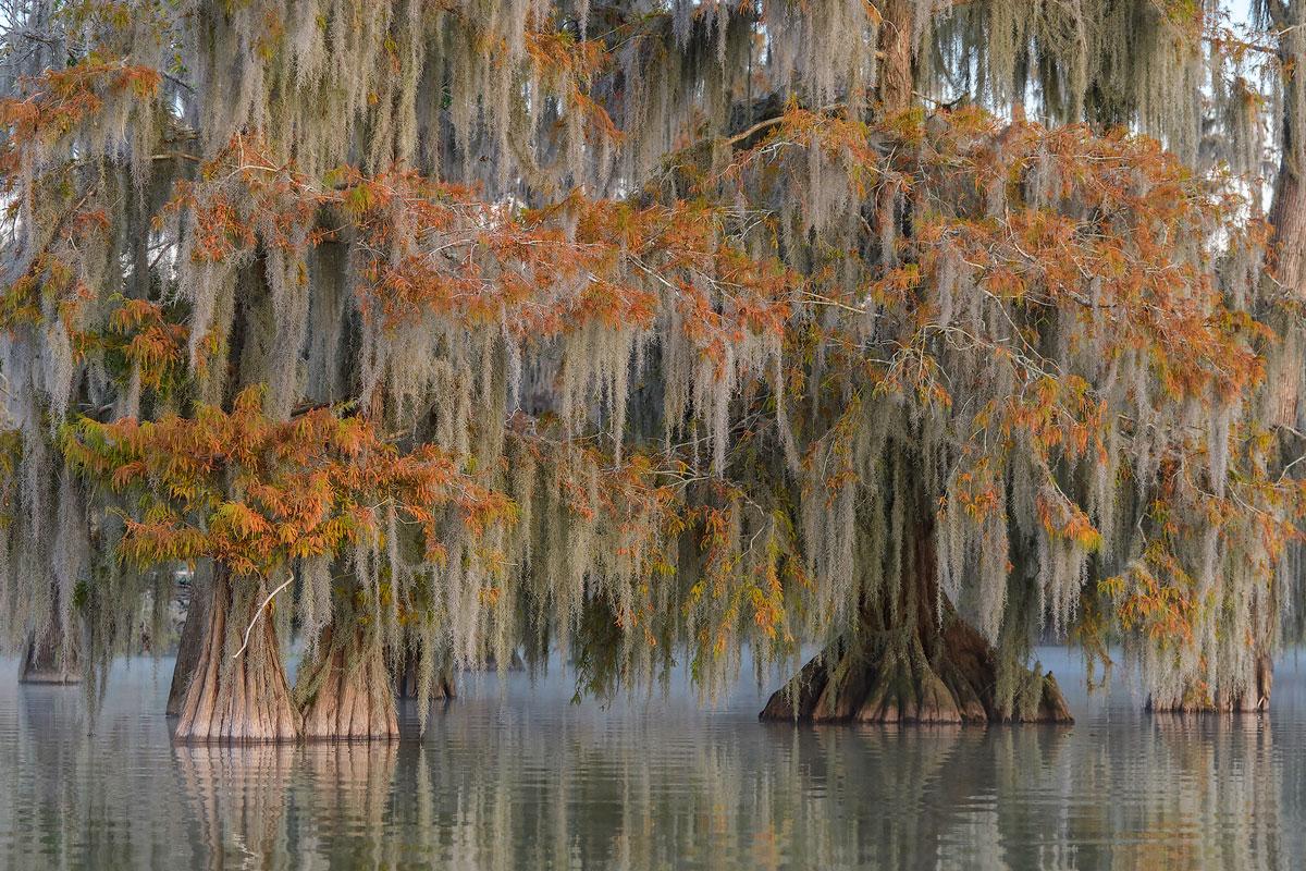 Foto Reise Cypress Swamps 2020